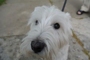 a friendly face in the village of Cazenovia